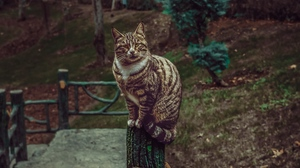 Preview wallpaper cat, glance, pet, striped