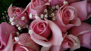 Preview wallpaper bouquet, buds, flowers, gypsophila, pink, roses