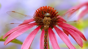 Preview wallpaper dragonfly, flower, plant