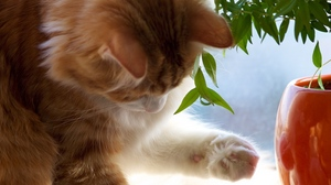 Preview wallpaper branch, cat, muzzle, paw, play