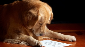 Preview wallpaper dog, muzzle, paper, reading, sheet