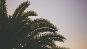 Preview wallpaper branches, palm tree, sky