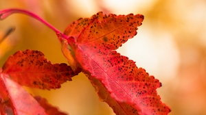 Preview wallpaper leaf, macro, red, spots