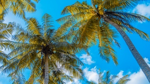 Preview wallpaper clouds, palm trees, sky, summer, tropics