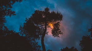 Preview wallpaper night, sky, sunset, tree