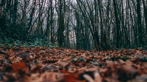 Preview wallpaper autumn, leaves, nature, trees