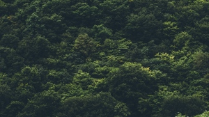 Preview wallpaper forest, top view, trees