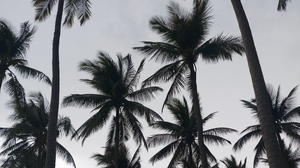 Preview wallpaper bw, palms, trees, tropics