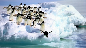 Preview wallpaper penguins, snow, water