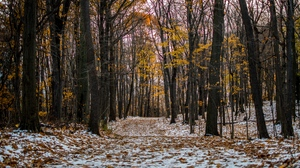 Preview wallpaper autumn, forest, path, snow, trail, trees, winter