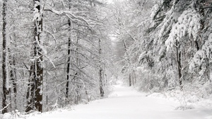 Preview wallpaper panorama, snow, trees, whiteness, winter, wood