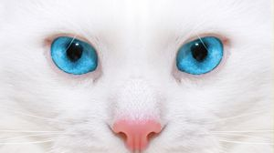 Preview wallpaper beautiful, close-up, kitten, white cat