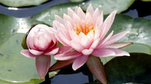 Preview wallpaper close-up, drops, leaves, mud, water, water lilies