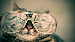 Preview wallpaper cat, face, funny, glasses, striped