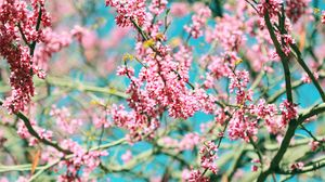 Preview wallpaper bloom, branches, flowers, pink, spring, tree