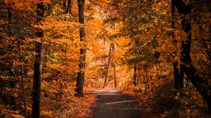 Preview wallpaper alley, autumn, foliage, path, trees