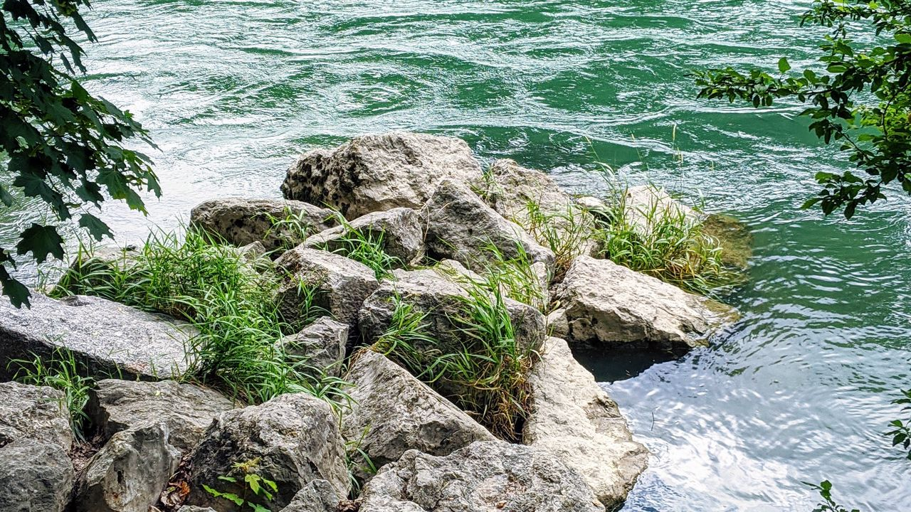 river waves grass branches stones