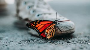 Preview wallpaper blur, butterfly, sneakers