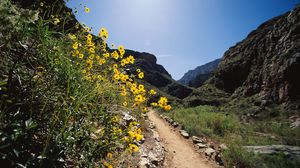 Preview wallpaper flowers, mountains, road, stones, track, yellow