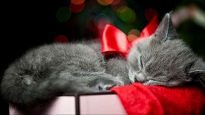 Preview wallpaper bow, kitty, sleep
