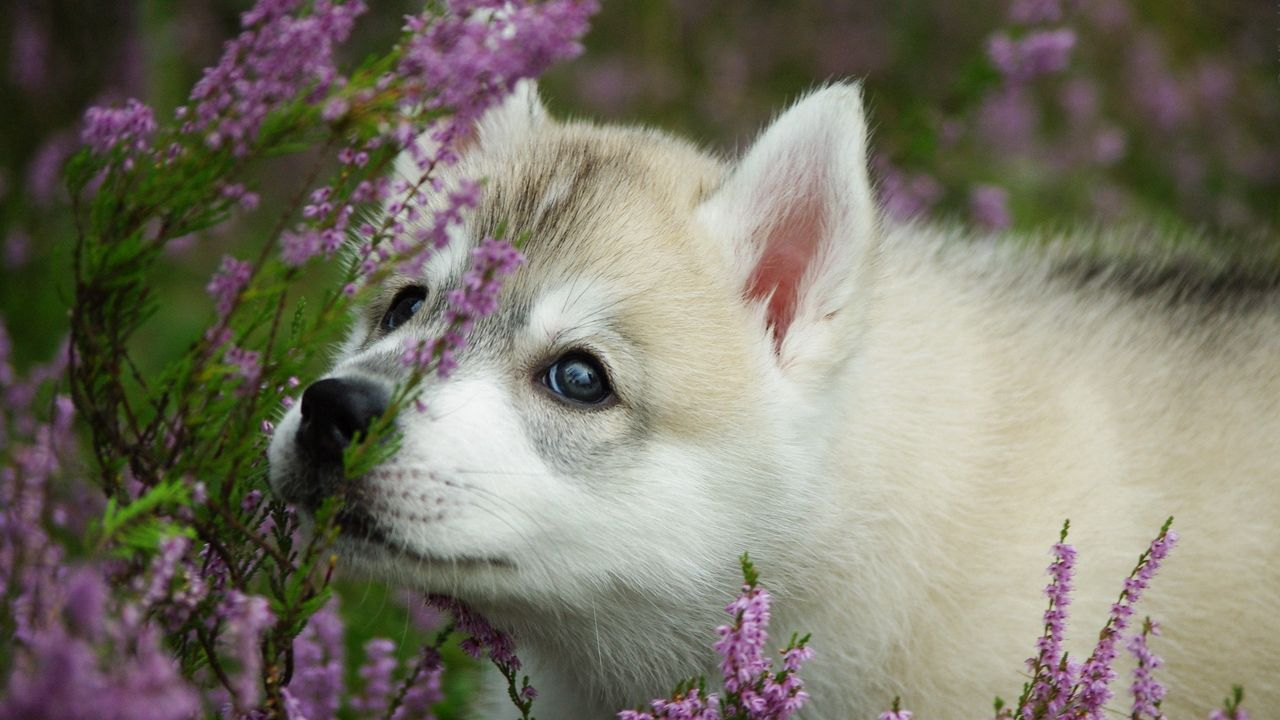 face flowers puppy dog