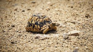 Preview wallpaper animal, pebbles, sand, shell, turtle