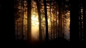 Preview wallpaper branches, forest, light, sun, tree