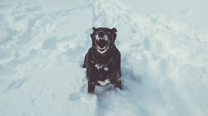 Preview wallpaper dog, grin, snow