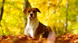 Preview wallpaper dog, eyes, fall, grass, leaves