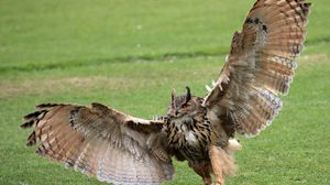 Preview wallpaper claws, grass, owl, paws, wings, wingspan