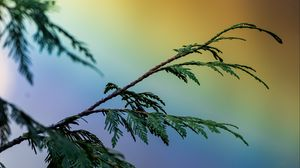Preview wallpaper branch, colorful, plant, rainbow