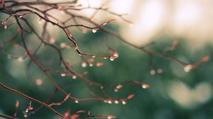 Preview wallpaper branches, dew, drops, light