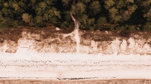Preview wallpaper aerial view, beach, forest, sea, shore
