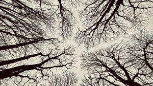 Preview wallpaper bottom view, branches, sky, trees