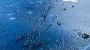 Preview wallpaper branches, bushes, frost, ice, lake, pond, rocks, winter