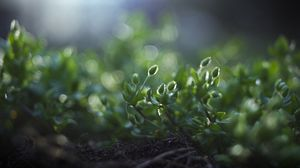 Preview wallpaper earth, grass, green, macro, roots, shade