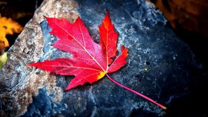 Preview wallpaper autumn, dry, leaf, red, stone