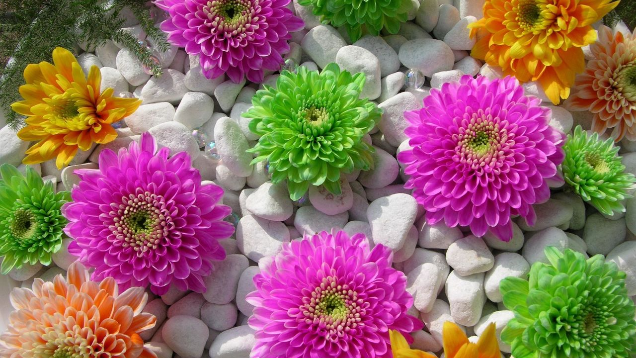 rocks flowers beauty composition chrysanthemums