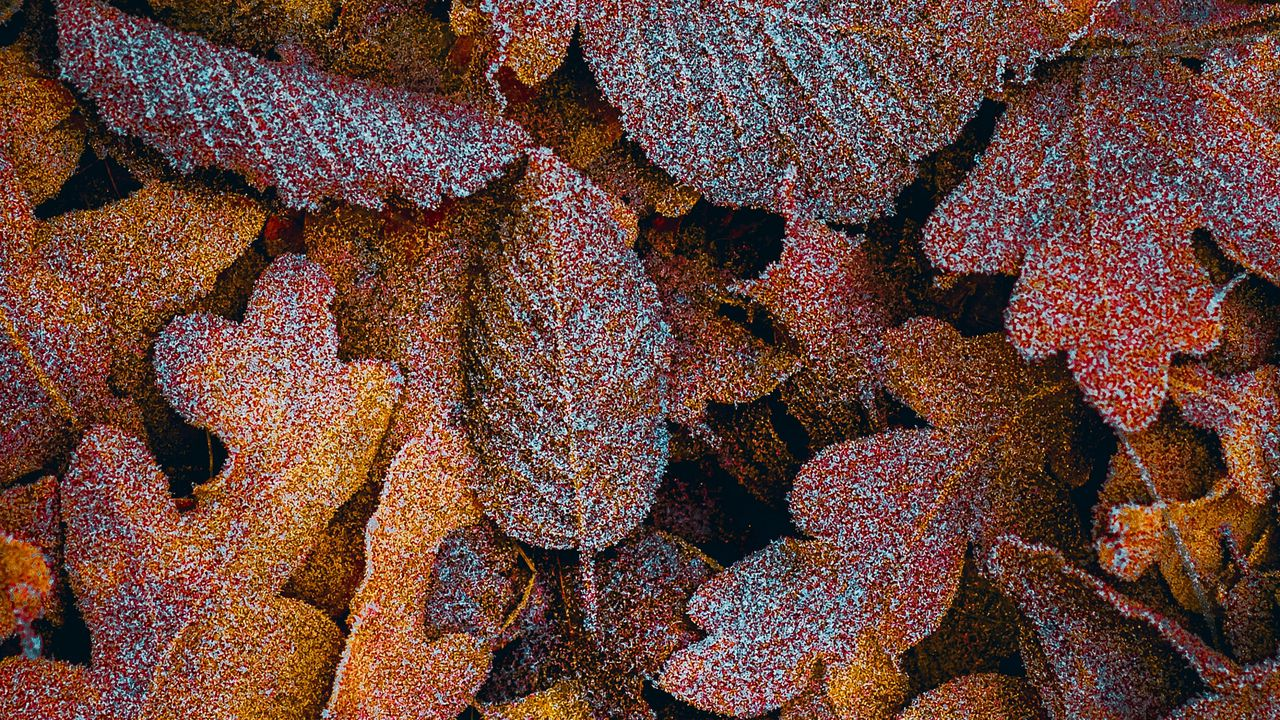 autumn macro frost brown leaves