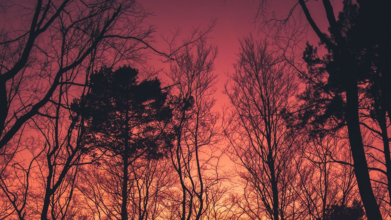 sunset branches dark silhouettes trees